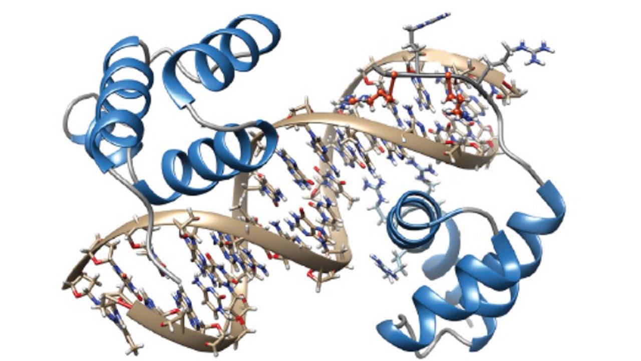 Estructura de TGIF1, unida al ADN