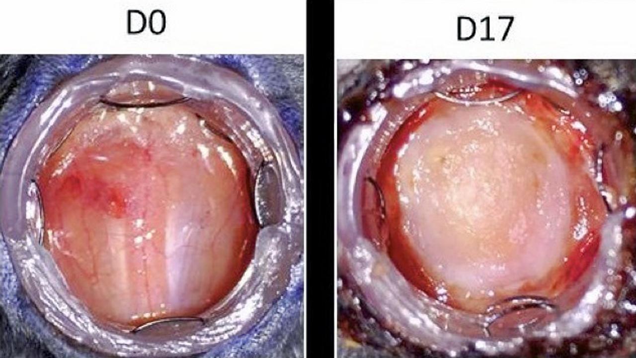 El sueño de regenerar órganos de forma endógeno llega a la piel ...