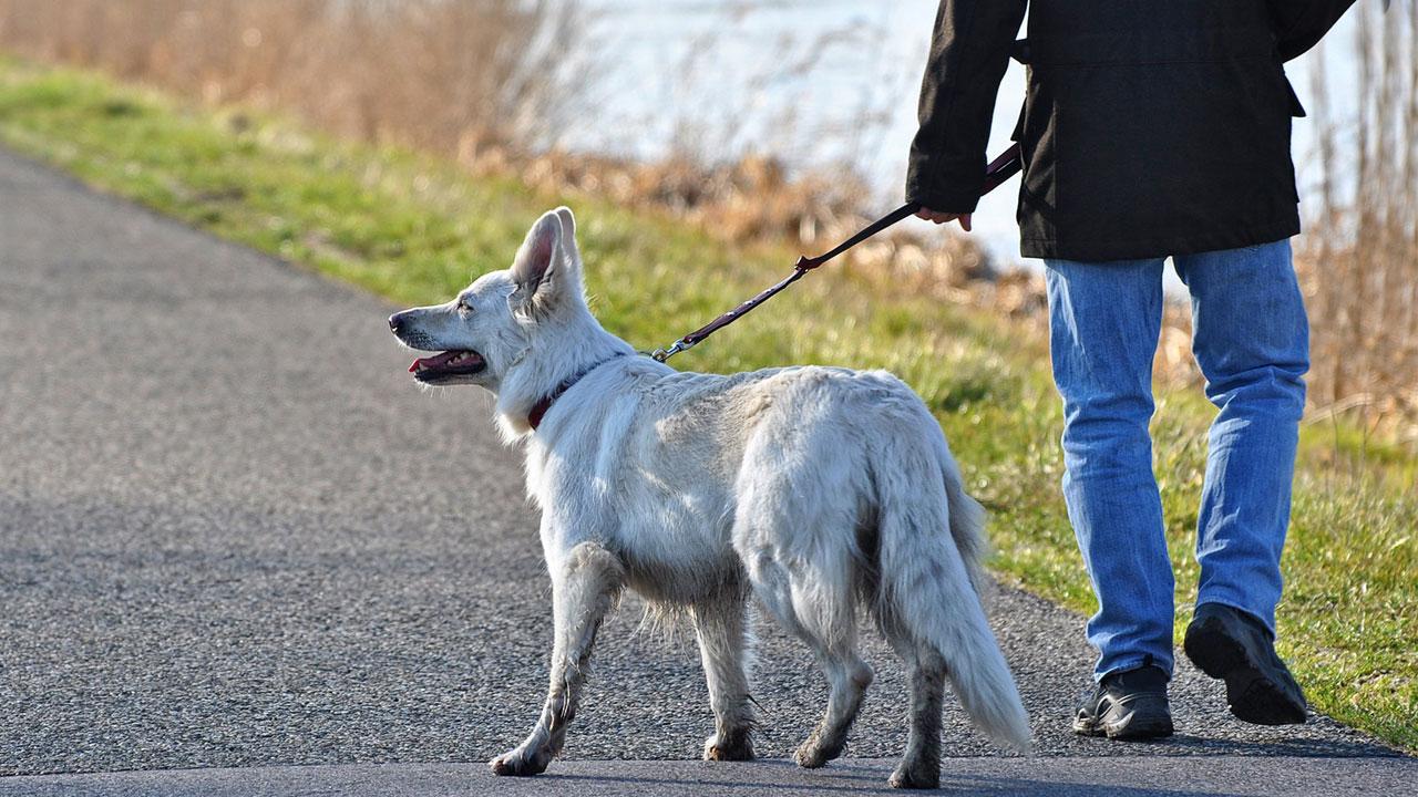 Sacar el perro de paseo puede ser peligroso