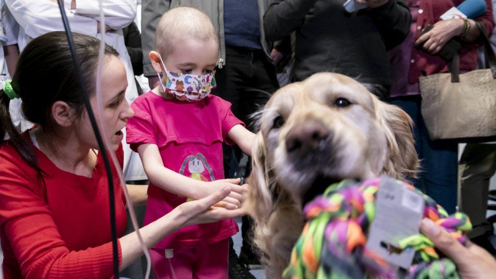 Una niña ingresada en la UCI Pediátrica del 12 de Octubre acaricia a Zenit, el perro que participa en el programa 'Huellas de Colores' de terapia asistida, que se ha puesto en marcha en el centro.