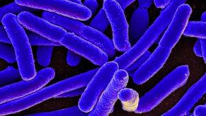 La bacteria E. coli, una de las que muestra resistencias.
