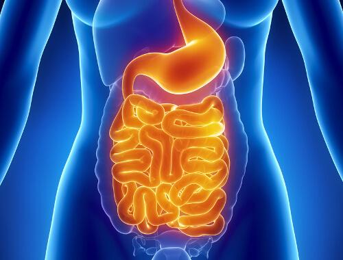 Proceso de digestión.