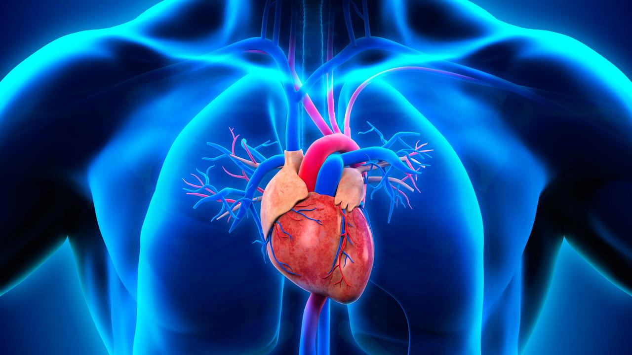 prediabetes circulación del corazón