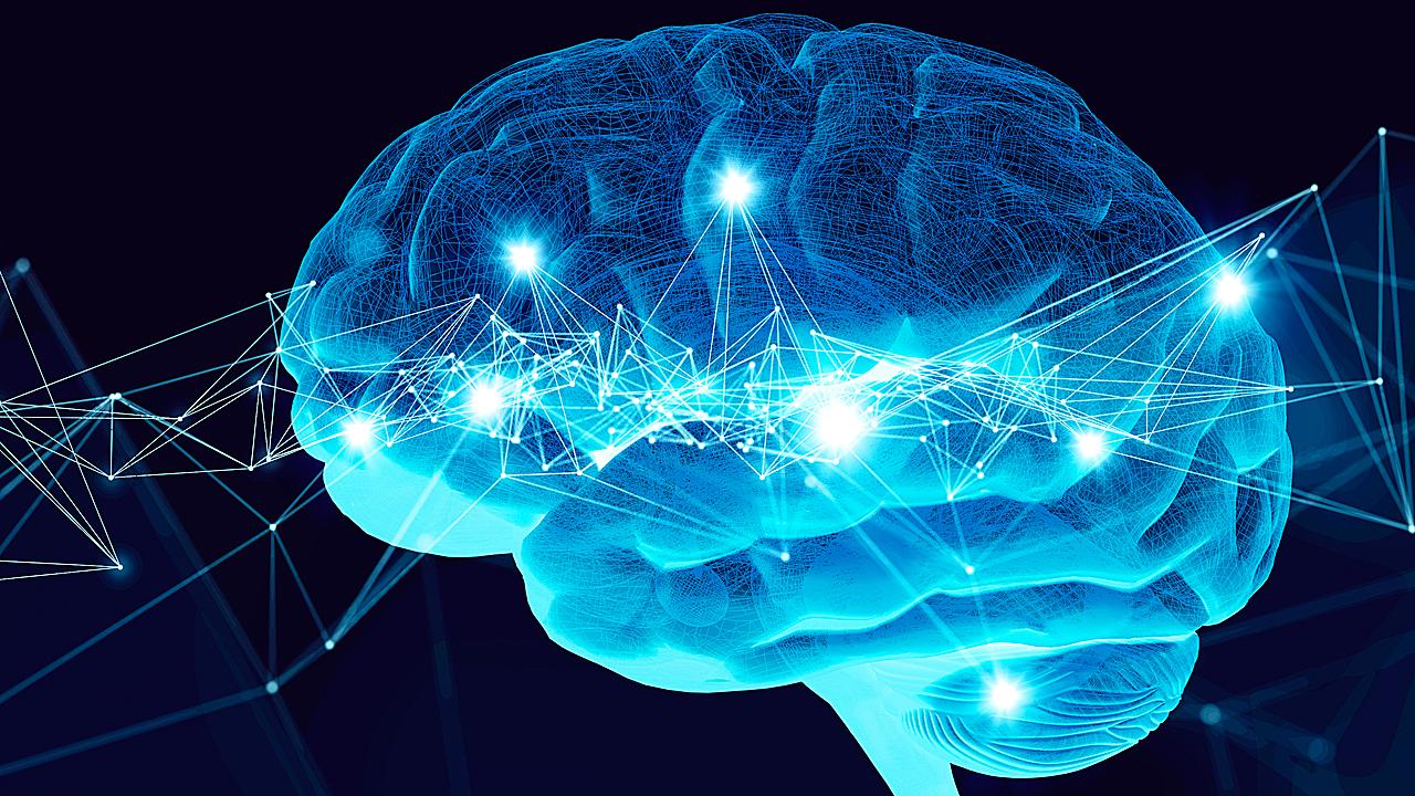 Un nuevo estudio analiza la plasticidad del cerebro adulto.