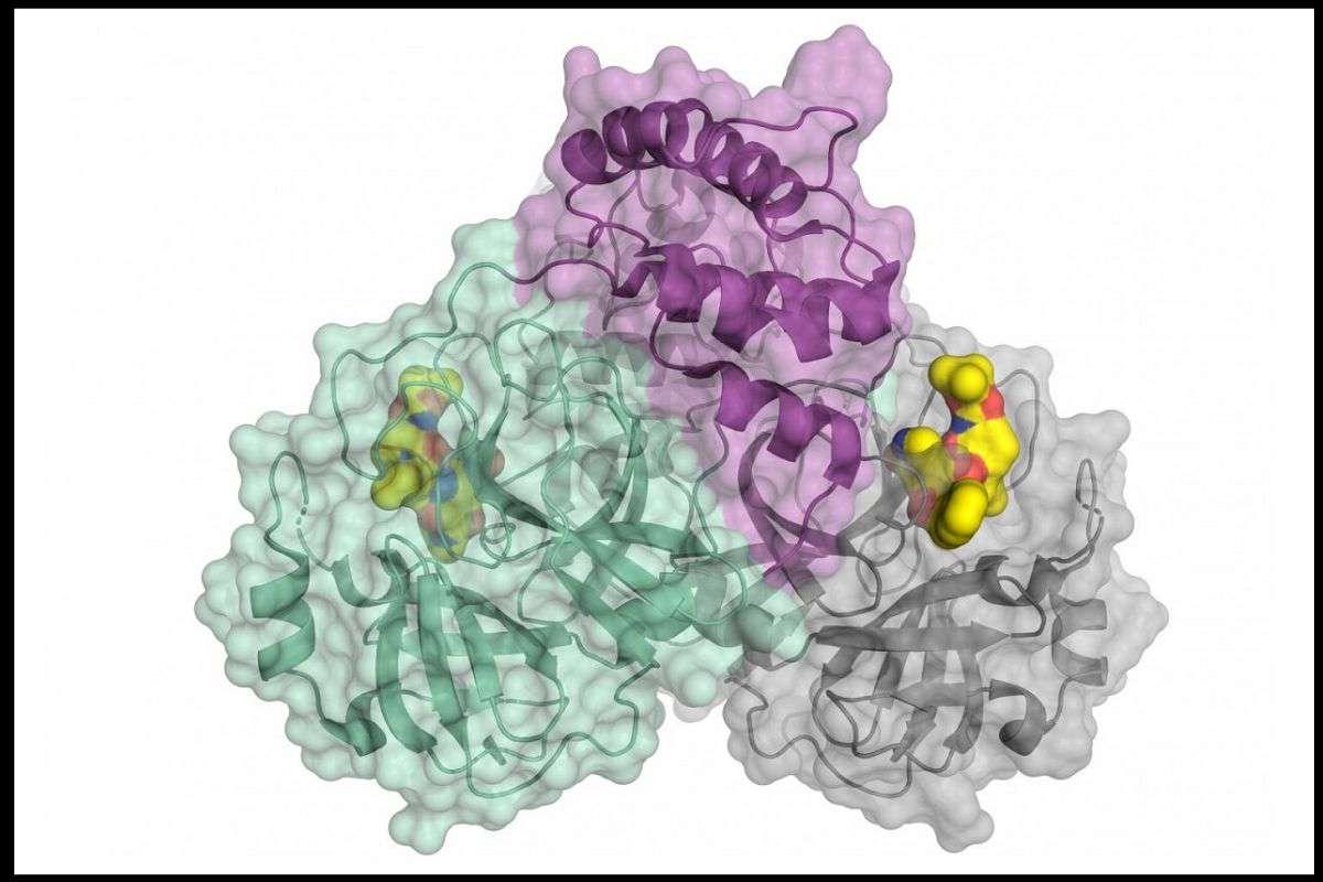 Estructura tridimensional de la proteasa del SARS-CoV-2