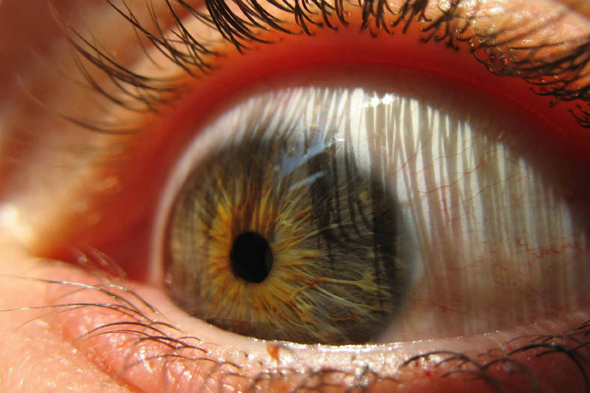 Un primer plano de un ojo