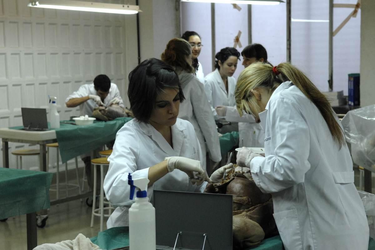 Estudiantes de Medicina en prácticas de Anatomía de la Facultad de Medicina de la Univesidad Complutense de Madrid.