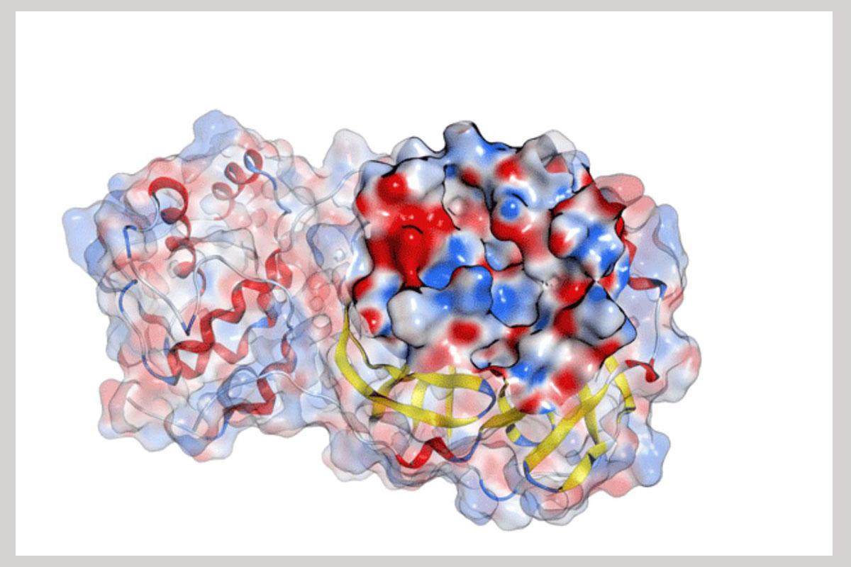 Imagen virus SARS-CoV2.