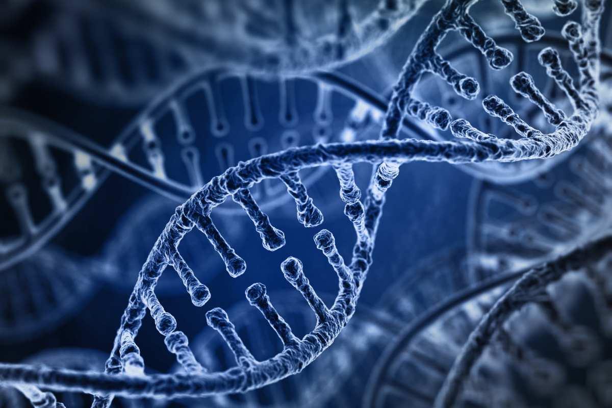 Los oligonucleótidos antisentido actúan como silenciadores génicos e interaccionan con el ácido ribonucleico mensajero.