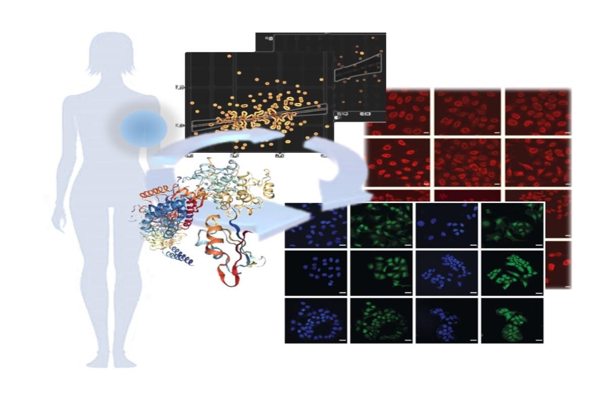Mecanismo biológico del estrés en cáncer de mama