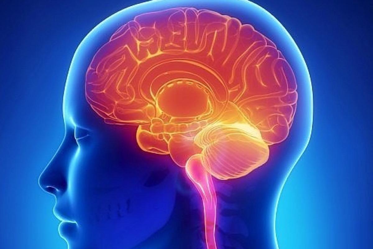 Dibujo de un cerebro humano.