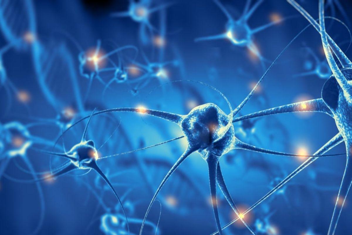 Las neuronas son susceptibles al efecto de la quimioterapia con platinos.