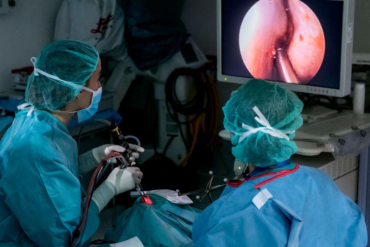 Cirugía de hipófisis.