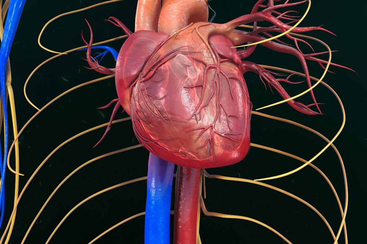 El estudio no halló relación entre el tipo de cardiopatía congénita y la gravedad de la covid-19.