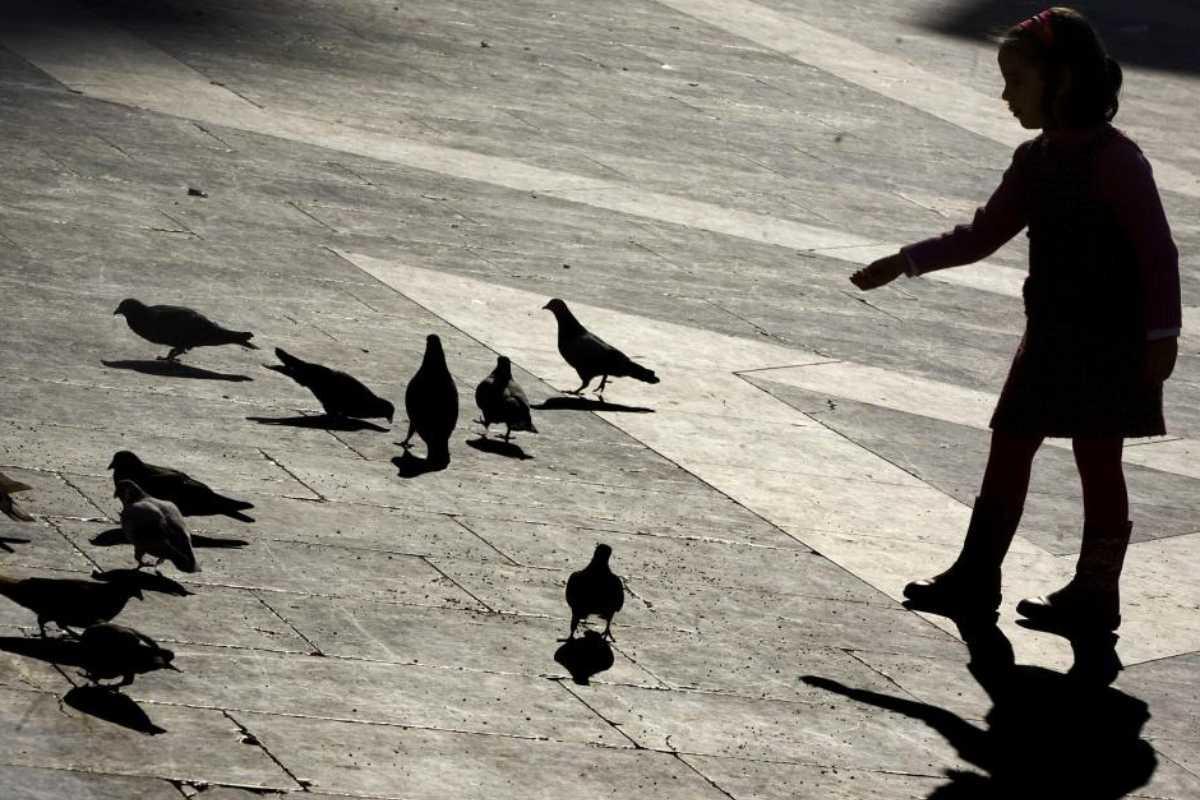 Una niña da de comer a las palomas.