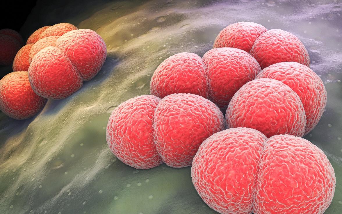 La vacuna está indicada frente a la enfermedad meningocócica invasiva causada por 'Neisseria meningitidis'.
