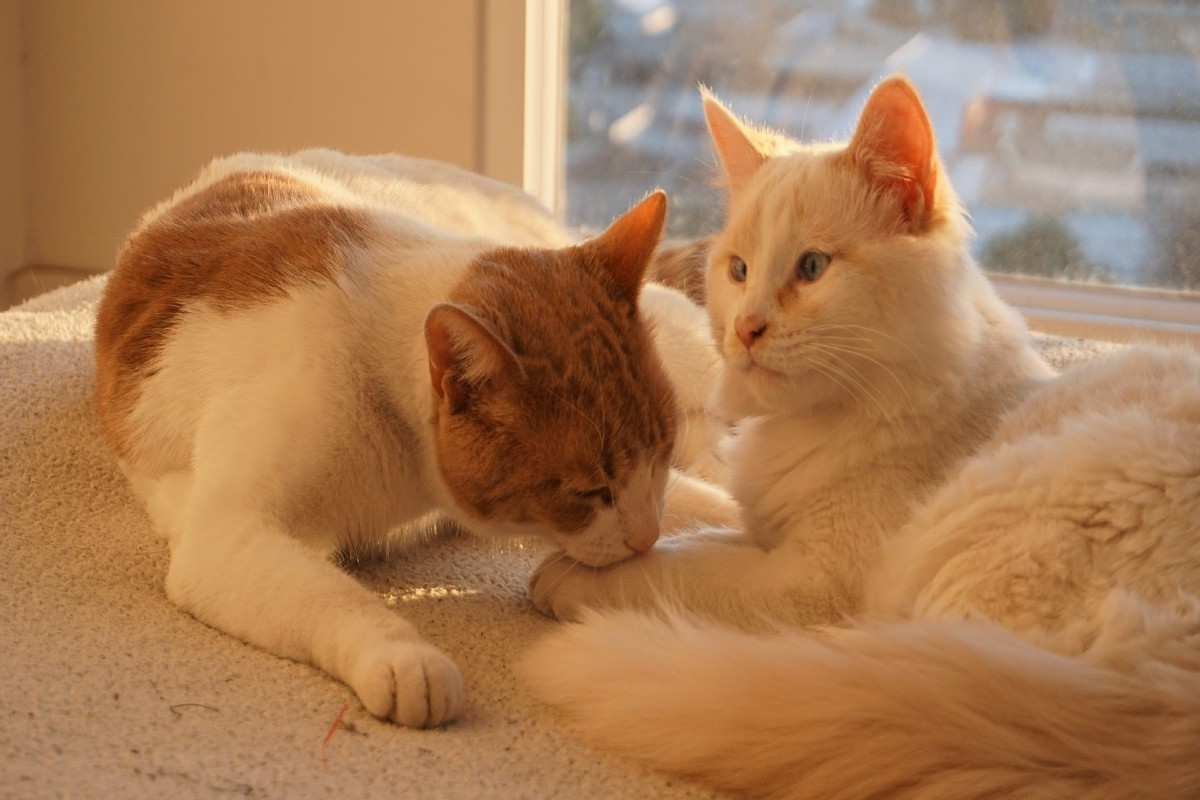 Una pareja de gatos