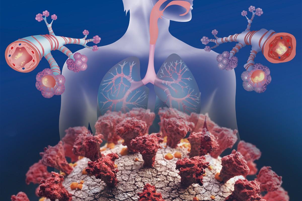 Anatomía pulmonar y coronavirus.