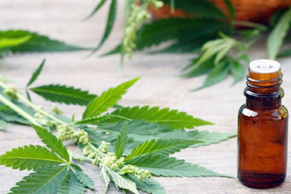 El cannabidiol es un componente no psicoactivo de la planta del cannabis.