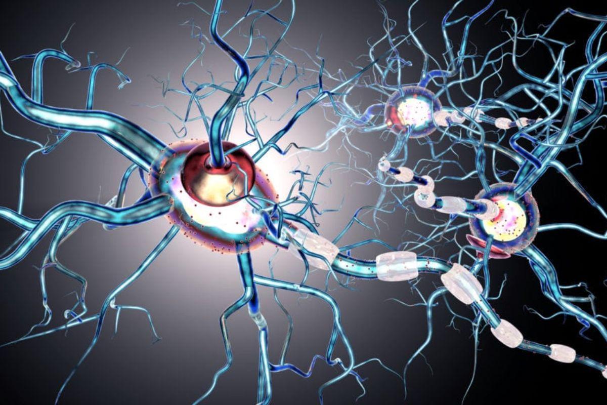 La EM afecta progresivamente al funcionamiento cerebral del paciente.