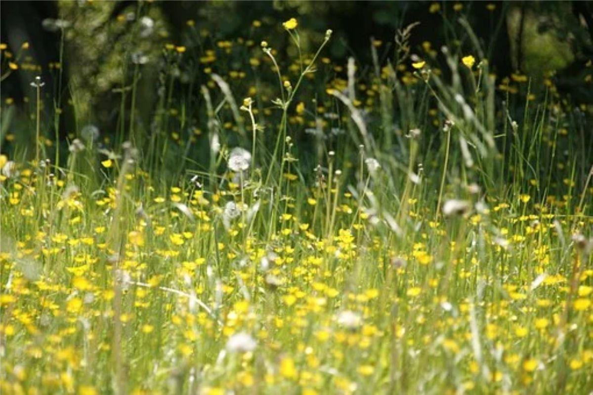 La primavera trae consigo pólenes causantes de síntomas alérgicos.