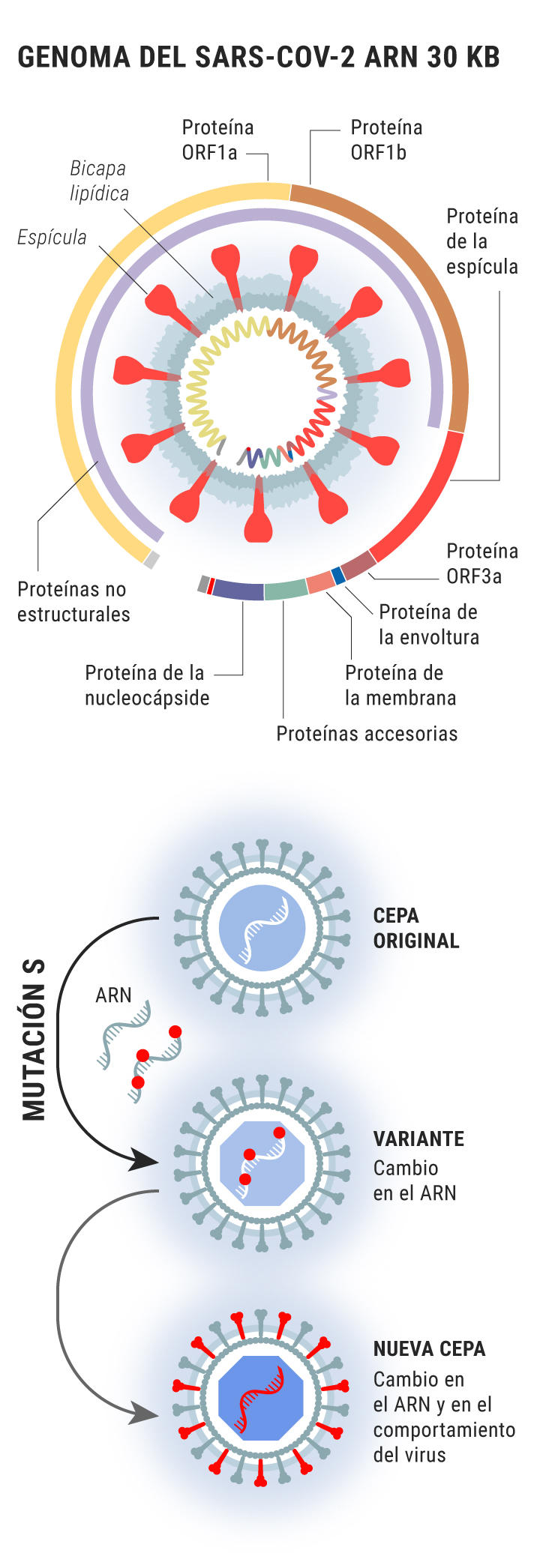 Gráfico sobre las mutaciones del SARS-CoV-2