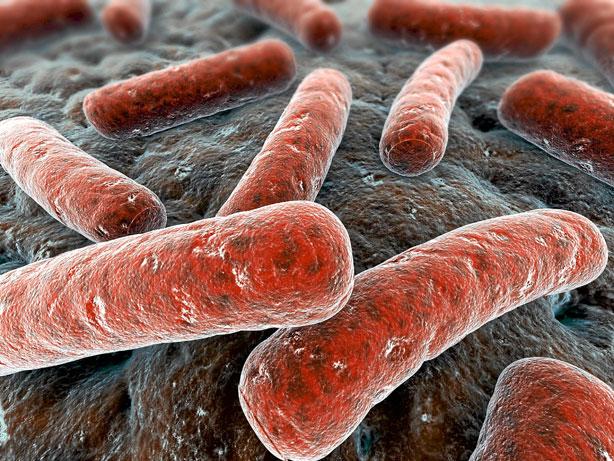 El bacilo de la tuberculosis causa más de ocho millones de casos en el mundo al año.