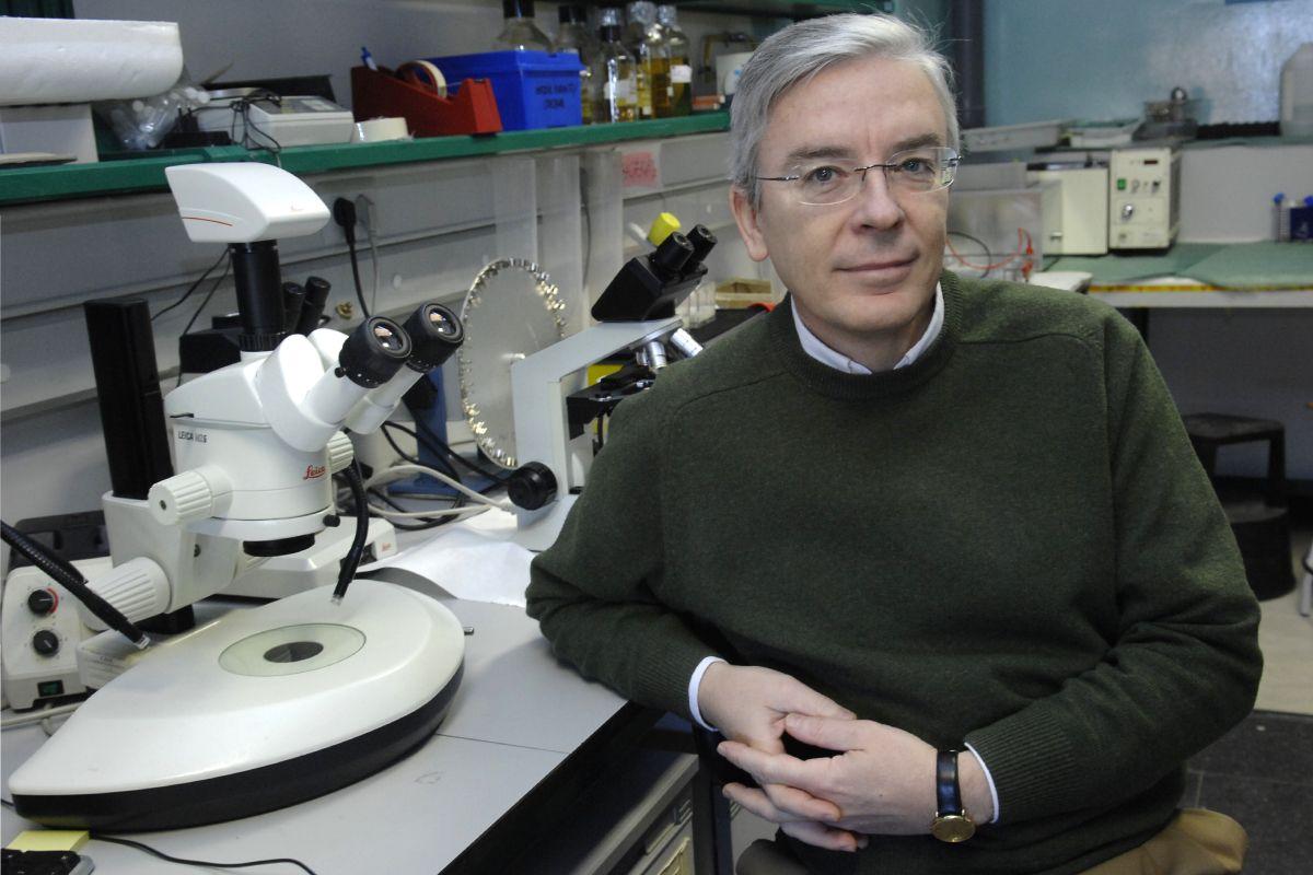 Mario Vallejo Fernández de la Reguera, director del Instituto de Investigaciones Biomédicas Alberto Sols, en Madrid. FOTO: José Luis Pindado.