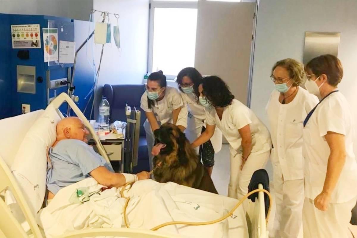 El equipo de Cuidados Paliativos del  Hospital Santa Luc�a acompañan al perro del paciente hasta su cama.