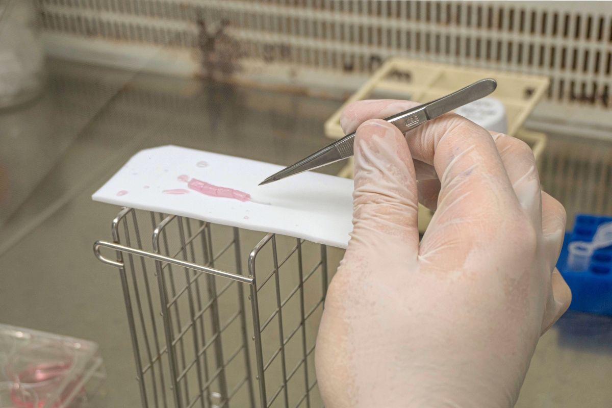 Los investigadores estudian 'in vitro' la utilidad de estos nuevos biomateriales. FOTO: UPV.