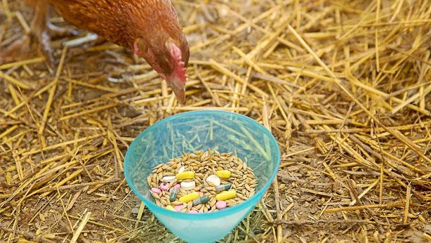 El Parlamento rechazó la semana pasada una propuesta deaumentar las restricciones en el uso de antibióticos veterinarios.