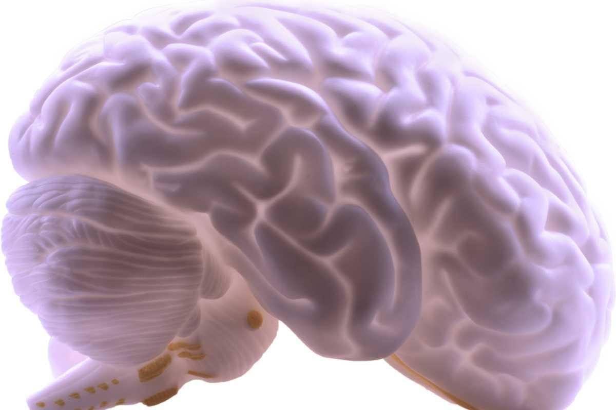 Se buscan nuevos fármacos para modular el flujo sanguíneo cerebral en enfermedades que cursan con su alteración.