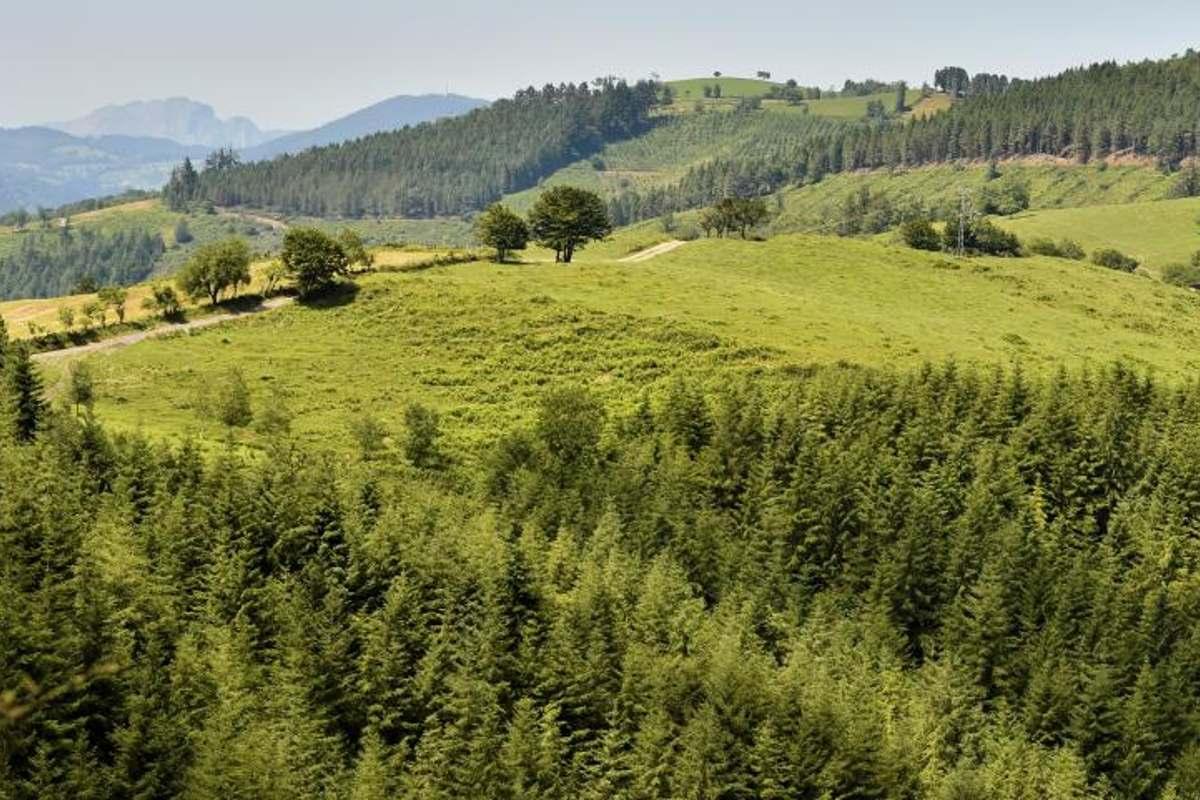 Campo verde con árboles
