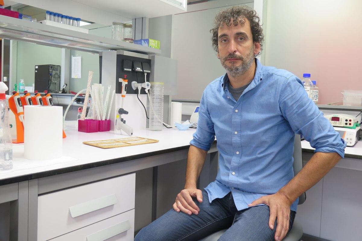 René Rodríguez, director del grupo de investigación en sarcomas y terapias experimentales del ISPA.